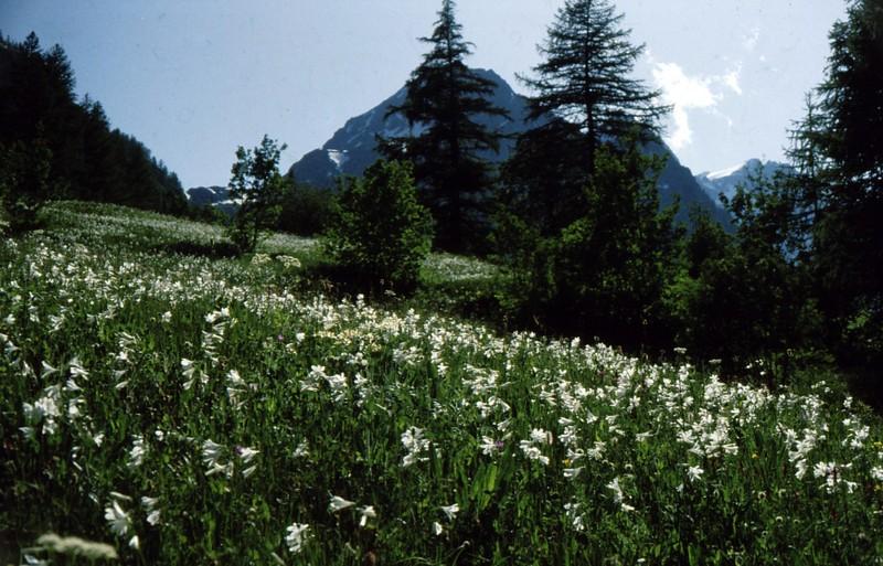 1984 Hautes-Alpes Montgenèvre Les Paradisia de Béassac